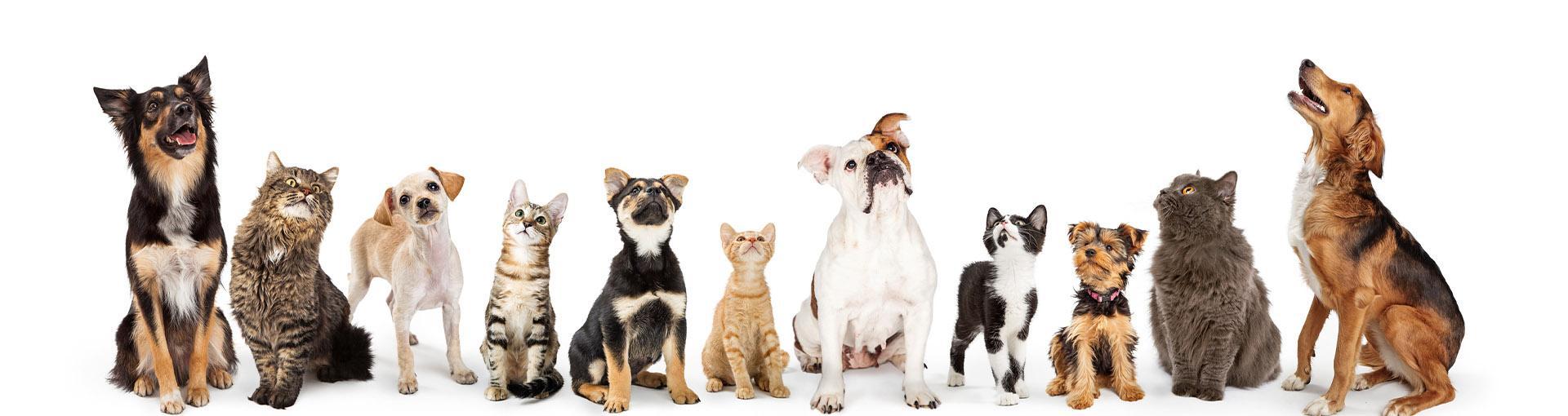 Baner psy i koty